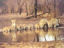 Gir National Park - Sasan Gir Tourism
