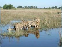 Sasan Gir Wildlife Sanctuary - Hotels in Sasan Gir