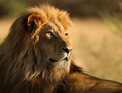 Sasan Gir National Park - Hotels in Sasan Gir
